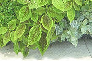 GREEN CANVAS 特許第5606042号取得